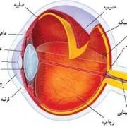 معافیت پزشکی - بخش سیزدهم - چشم و عوارض بینایی