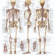 معافیت پزشکی - بخش هشتم - استخوان اسکلت