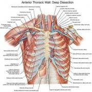 معافیت پزشکی - بخش هفتم - ریه و قفسه صدری